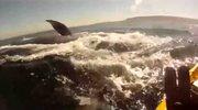 Среди китов
