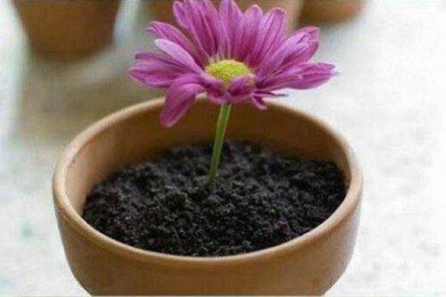 Десерт в цветочном горшке
