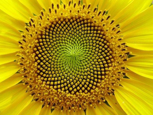 Цветы и математика