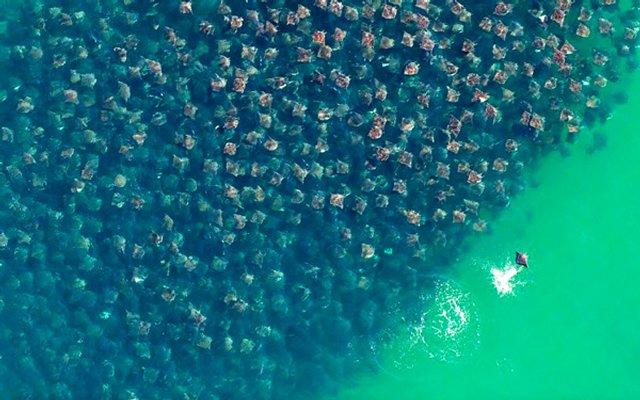 Перелеты в воде