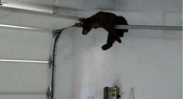 Медвежонок в гараже