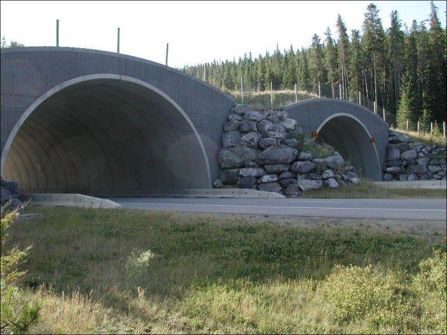 Мост для живонных