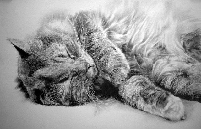 Реалистичные рисунки кошек