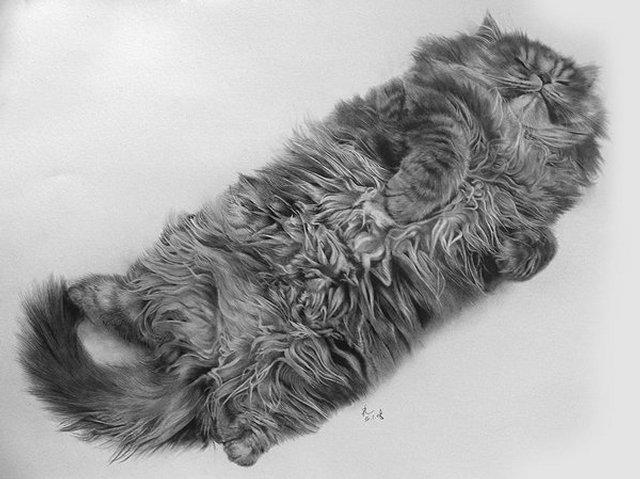 Рисунки кошек карандашом